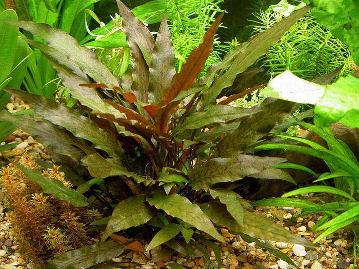 Основы хорошего роста аквариумных растений