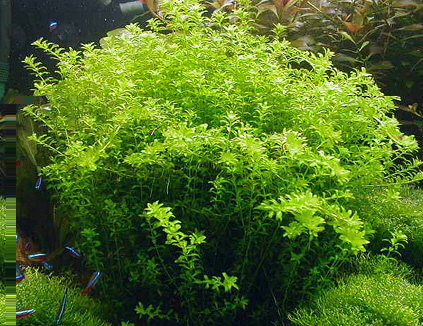 подкормка аквариумных растений