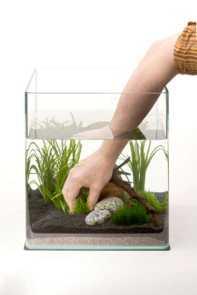 запускаем аквариум