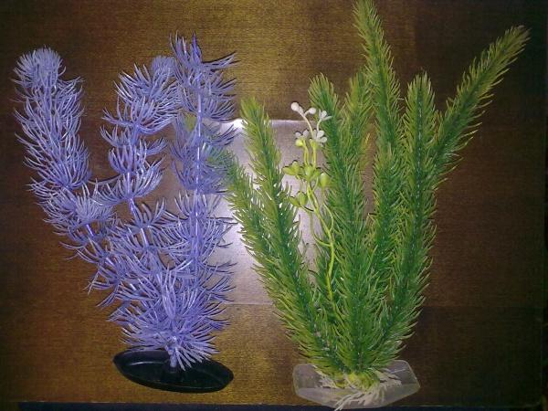 Растения для аквариума - живые или искусственные?