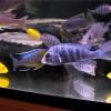 Как сделать так, что бы мальки в аквариуме выжили?