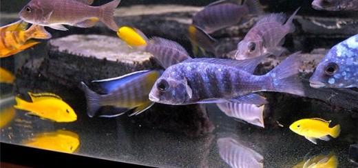 что бы мальки в аквариуме выжили