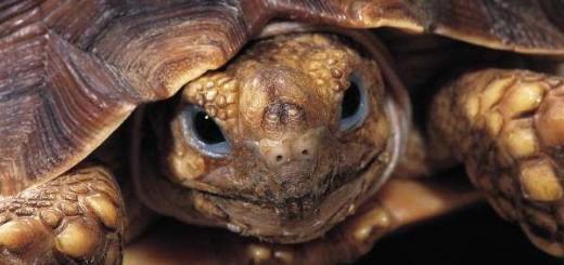 Выбираем домик для черепахи.