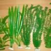 Правда о синтетических растениях.