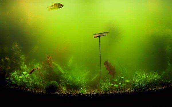 если в аквариуме мутнеет вода