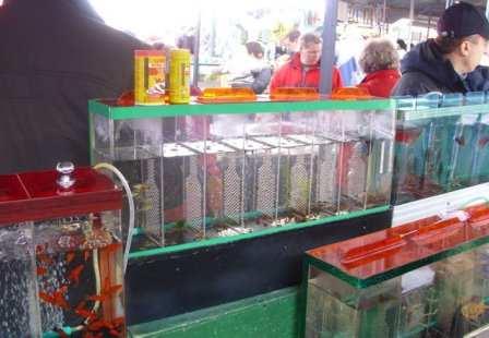 покупка акариумных рыб