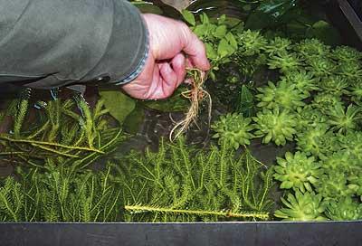 как выбирать растения для аквариума
