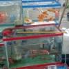 Как выбрать здоровых аквариумных рыб при покупке.