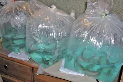перевозка аквариумных рыб