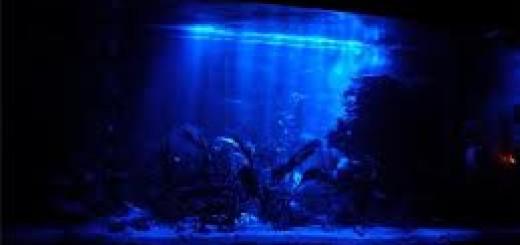 ночная подсветка аквариума