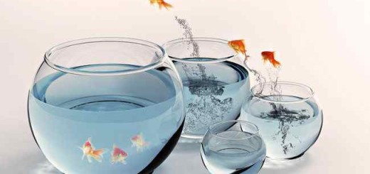 нерест рыбок