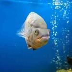 Распылители воздуха для аквариума