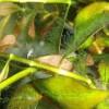 Водоросли паразиты аквариума, их виды и методы борьбы