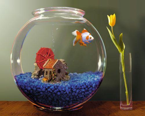 Вопросы по аквариуму, советы аквариумистам, секреты. Часть 6