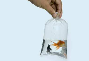 советы аквариумисту