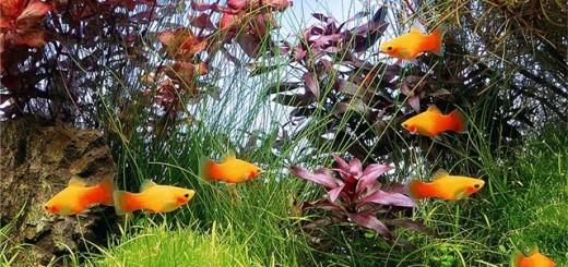 Секреты аквариумистов