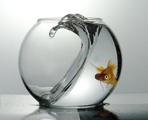 советы аквариумистам