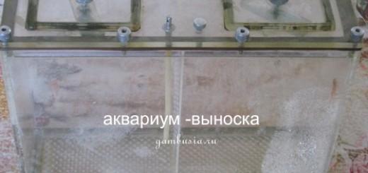 аквариум-выноска
