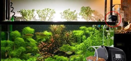 аквариум без присмотра